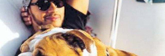Cani vegani, la nuova moda. «Ma per loro è pericoloso»