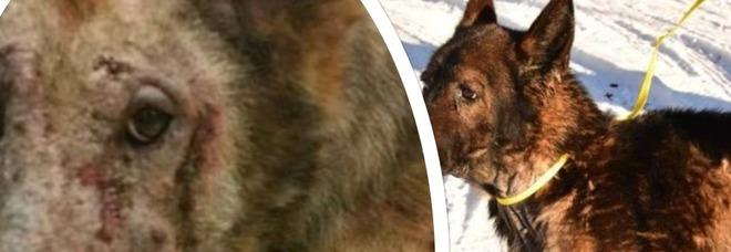 Lascia i cani senza acqua e cibo per mesi, gli animali si sbranano tra loro: le immagini choc su Facebook