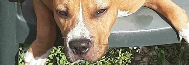CUCCIOLO Il cane è stato soppresso, aveva quasi un anno