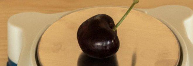 Emilia Romagna, raccolta la ciliegia più pesante al mondo: è da Guinness World Record