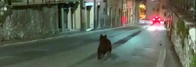 Orsetto affamato assalta un'abitazione nella notte. «Sentivo battere sulla vetrata, ho lanciato petardi»
