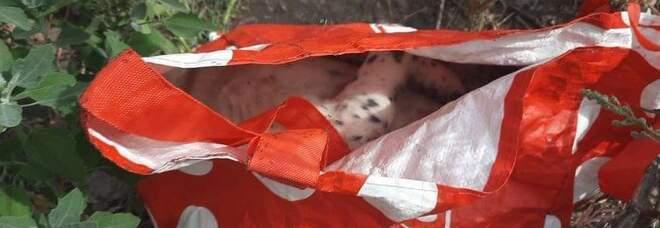 Choc a Pompei: cagnolino morto gettato tra i rifiuti sulla strada