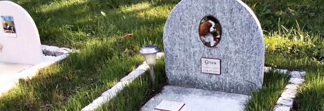 Cani e gatti seppelliti accanto ai padroni, ecco dove sarà realizzato lo speciale cimitero