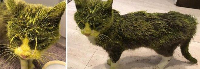Spruzza vernice gialla su un gatto, il micio muore dopo pochi giorni: caccia al serial killer di animali