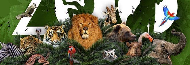 Lo zoo di Napoli è il primo in Italia nella Global Coalition #UnitedforBiodiversity