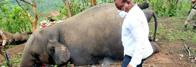 Uno degli elefanti trovati morti (immag pubbl da Chief Minister Assam su Twitter)