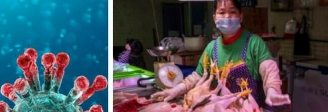 Covid, l'Oms: «La scorsa settimana 4,4 milioni di casi, la fine della pandemia è ancora lontana»