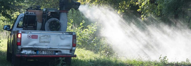 West Nile, a Padova la quinta vittima: paura per il virus trasmesso da un tipo di zanzara