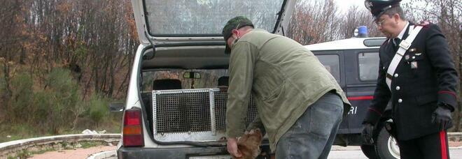 Acerra, maltrattamento animali e abbandono: sequestrati 3 cani