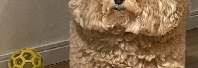 Cane trionfa su Twitter per la sua somiglianza con i personaggi di Among Us