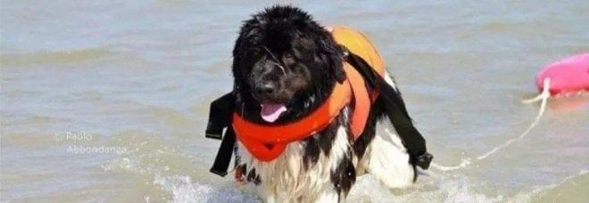 Addio a Grace, il primo cane bagnino di Bari