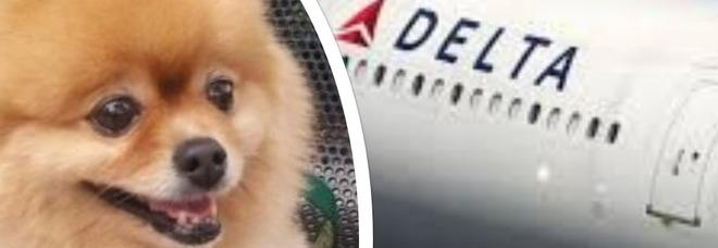 Cane trovato morto sul volo: lo scandalo travolge la compagnia aerea