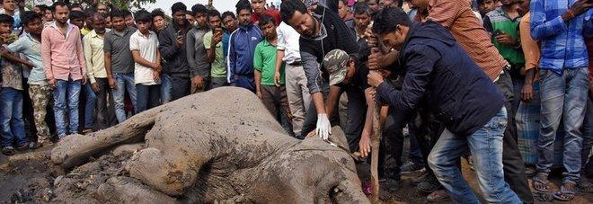 India, sinistro tra un treno e una mandria di elefanti, 5 esemplari morti