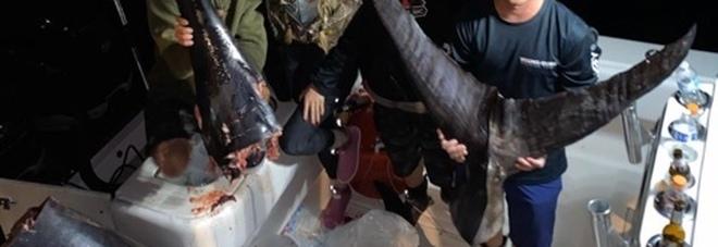 Catturano negli Stati Uniti un pesce spada di quasi 350 chili e per poco non battono il record nazionale