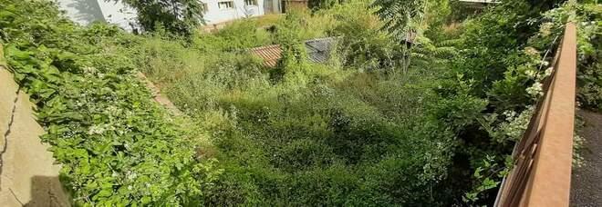 Pozzuoli, la villa rustica romana, diventa jungla