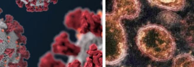 «Epidemia di coronavirus già 20.000 anni fa in Asia»: lo svela un team di scienziati americani e australiani