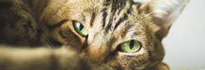 Muore il gatto Frankie, la famiglia lo fa cremare. Ma dopo qualche giorno il micio si ripresenta a casa