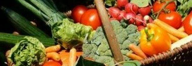 Agriturismo, voglia di viaggiare accelera ripresa in campagna