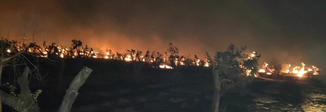 Incendi, anche la Cia scrive al prefetto: «Piano mirato o sarà disastro ambientale»