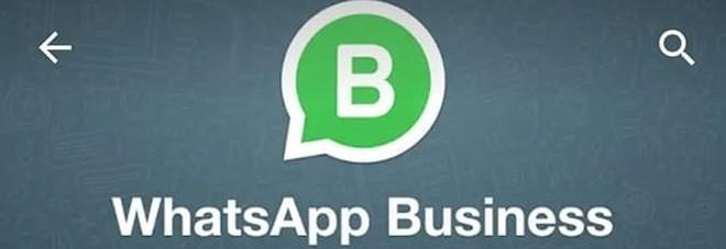 WhatsApp Business, ecco la nuova app (gratuita) per le imprese