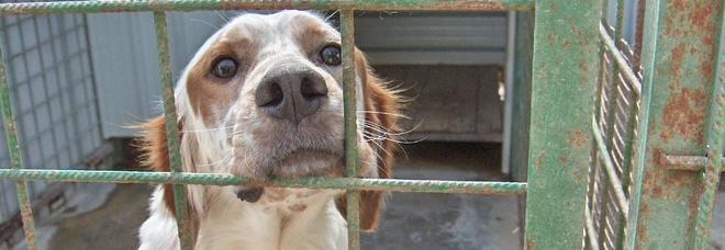 Animali Maltrattati 108 Cuccioli Di Cane Sequestrati Dai Forestali
