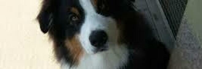 Cane eredita cinque milioni di dollari dopo la morte del suo proprietario