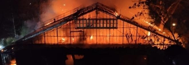 Incendio devastante allo zoo di Krefeld, strage di scimmie: due scimpanzè vivi per miracolo