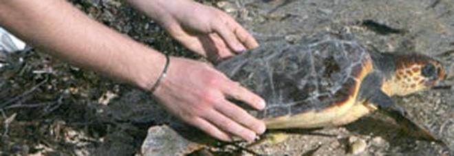 Tragedia in spiaggia in Salento, muore durante la liberazione delle tartarughe
