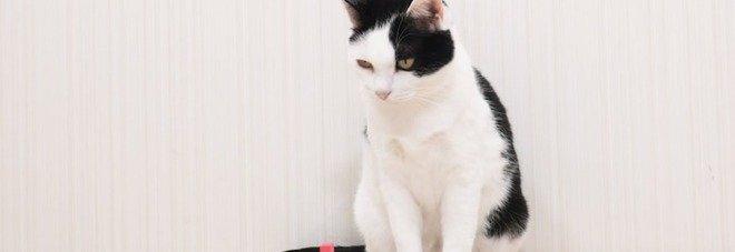 Youtuber giapponese coinvolge i suoi gatti in una colorata cascata di domino - VIDEO
