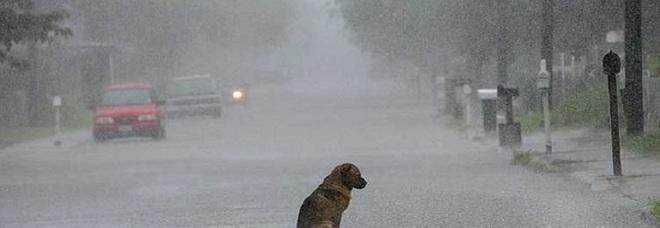 Abbandona il cane ma lui ritrova la strada di casa, padrone lo fa abbattere dal veterinario