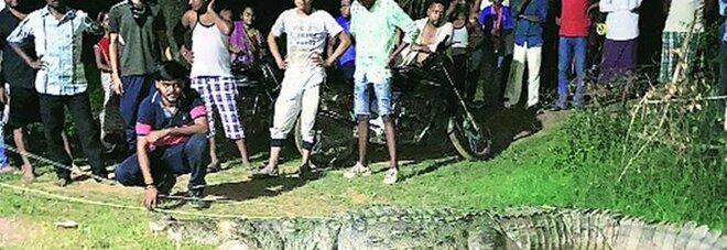 Catturano in India un coccodrillo che ha ucciso sette persone in sette anni