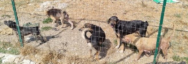 In casa con 34 cani nel Casertano: donna multata e ricoverata in ospedale