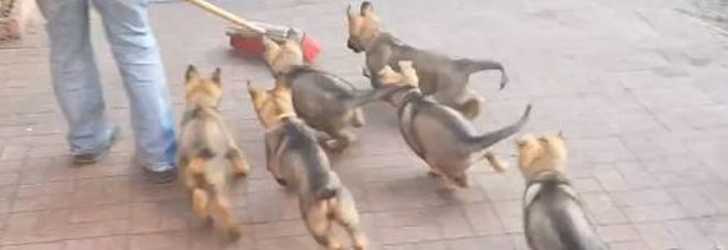 Un frame dei video pubblicato da liveleak