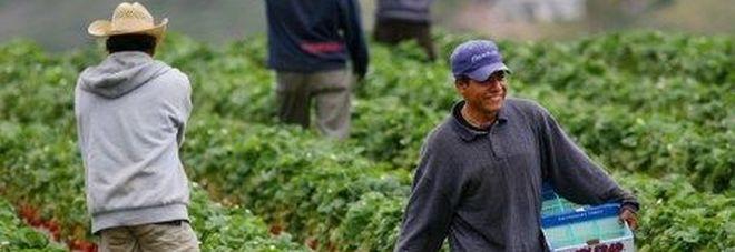 Agricoltori al lavoro