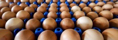 Ritorna la paura delle uova contaminate con antibiotici