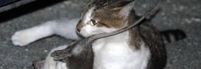 Gatto E Topo Innamorati Si Scambiano Coccole E Tenerezze Video