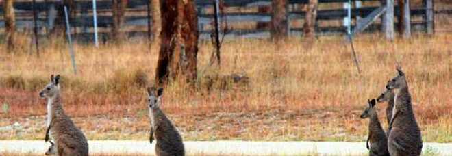 Viaggio avventura nell'Outback dell'Australia: il selvaggio Northern Territory