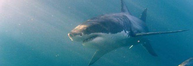 Squalo attacca e uccide un bagnante a Capo Cod: non accadeva ad 80 anni