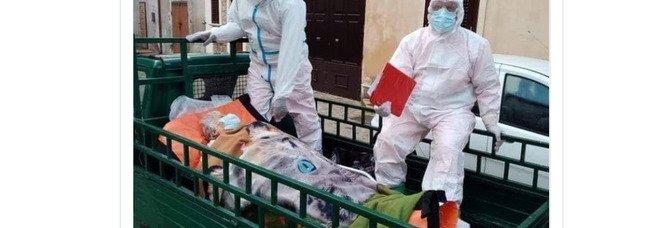 Anziana malata portata in ospedale su un'Ape a Crotone, ma è una notizia di buona Sanità