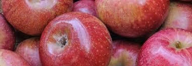 La mela annurca miracolosa per combattere il colesterolo