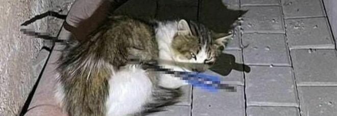 Il povero micio trafitto dalla freccia che lo ha ucciso. (Immag diffusa sui social da Gaia Animali e Ambiente)