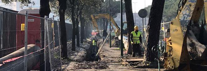 Napoli Est, via ai lavori per «pulire» il mare: ma ora si teme per le radici degli alberi toccate dallo scavo