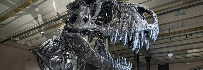 Argentina, scoperto un nuovo dinosauro simile al T-Rex: risale a 80 milioni di anni fa