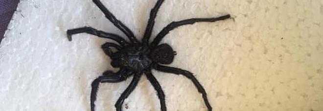 Trova ragno a imbuto sotto il letto, donna viva per miracolo. «Il veleno uccide in 15 minuti»