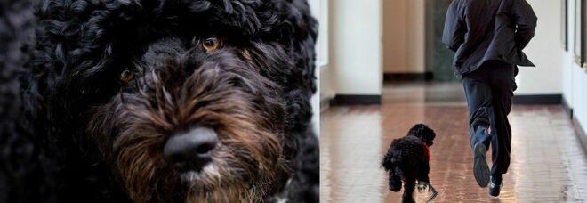 Obama, morto il cane Bo: «Abbiamo perso un compagno fedele, ci mancherà tantissimo»