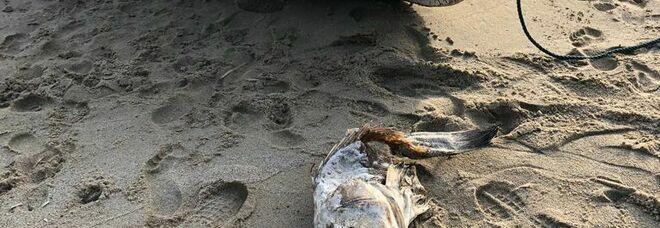 Cilento, rubato il gozzo usato per pulire mare e arenile