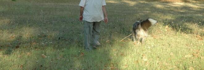 Roma choc, cane senza guinzaglio aggredisce due bambini di 9 e 6 anni nel parco: feriti