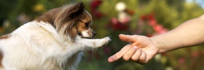 Le 11 cose che fanno i padroni e che i cani odiano il - Quando fare il primo bagno al cane ...