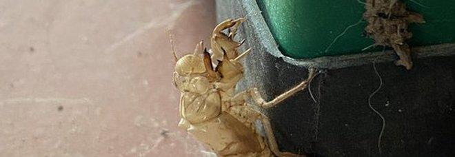 Orrore in terrazzo, trova il 'regalo' di un insetto: «Devo abbandonare la casa?»