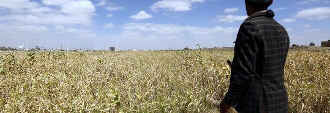 Alimentazione, Onu: «Anno pandemia segna bruscamente impennata fame nel mondo»